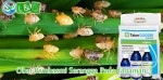 Obat Pembasmi Serangga Pada Tanaman