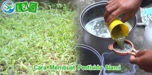 cara membuat pestisida alami