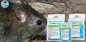 obat pembasmi hama tikus