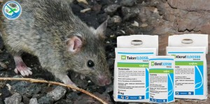 obat pembasmi kutu tikus