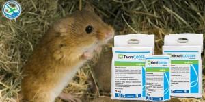 obat pembasmi tikus