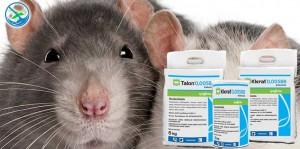 obat pembasmi tikus ampuh