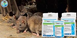 obat pembasmi tikus besar