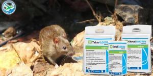 obat pembasmi tikus di rumah