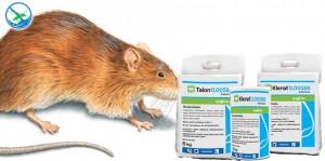obat pembasmi tikus paling ampuh