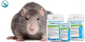 obat pembasmi tikus yang ampuh