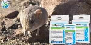 obat pengusir tikus curut