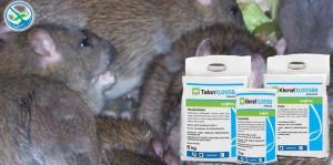 obat pengusir tikus di rumah