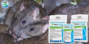 obat pengusir tikus yang ampuh