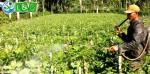 Bahaya & Dampak Pestisida Terhadap Lingkungan