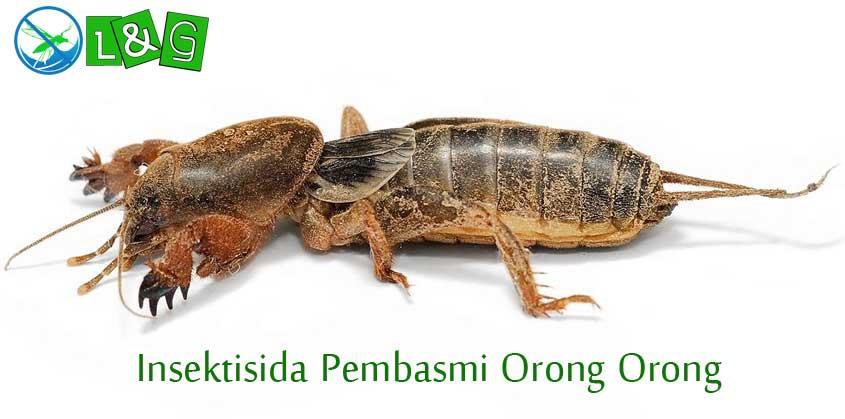 Insektisida Pembasmi Orong Orong