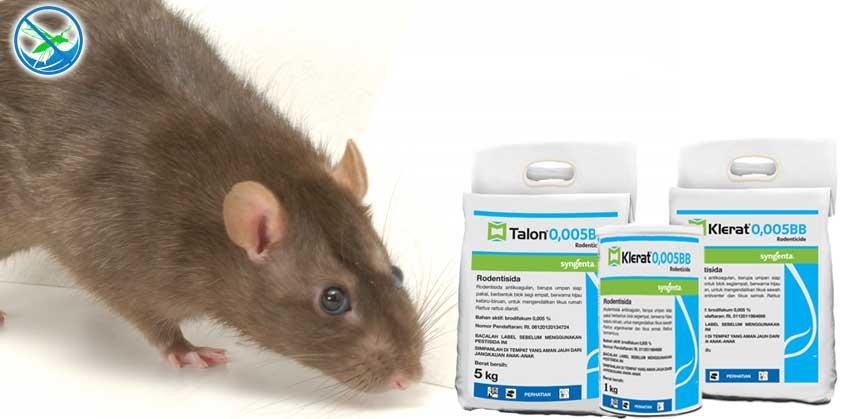 harga obat pembasmi tikus