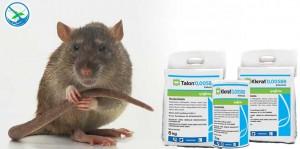 jual obat pembasmi tikus