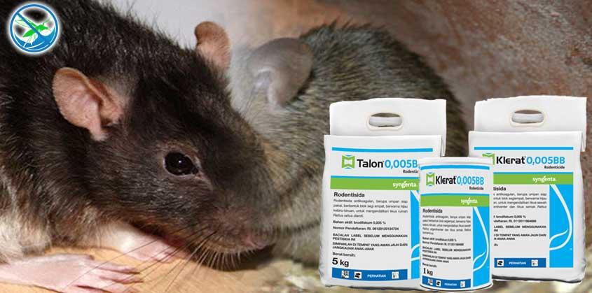 obat ampuh basmi tikus