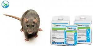 obat ampuh pembasmi tikus got