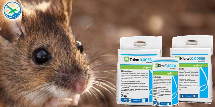 obat basmi tikus rumah