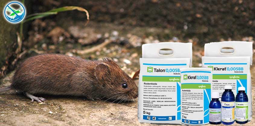 obat basmi tikus