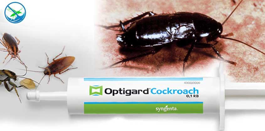 obat kecoa paling ampuh