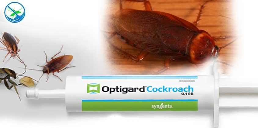 obat kecoa yang paling ampuh