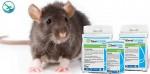 obat pembasmi tikus dan curut