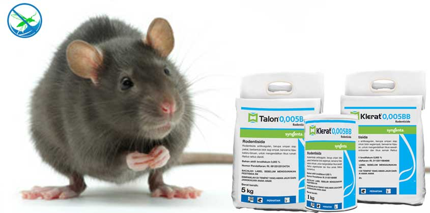 obat pembasmi tikus got