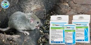 obat pembasmi tikus pada padi