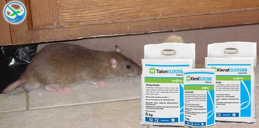 obat pembasmi tikus rumahan