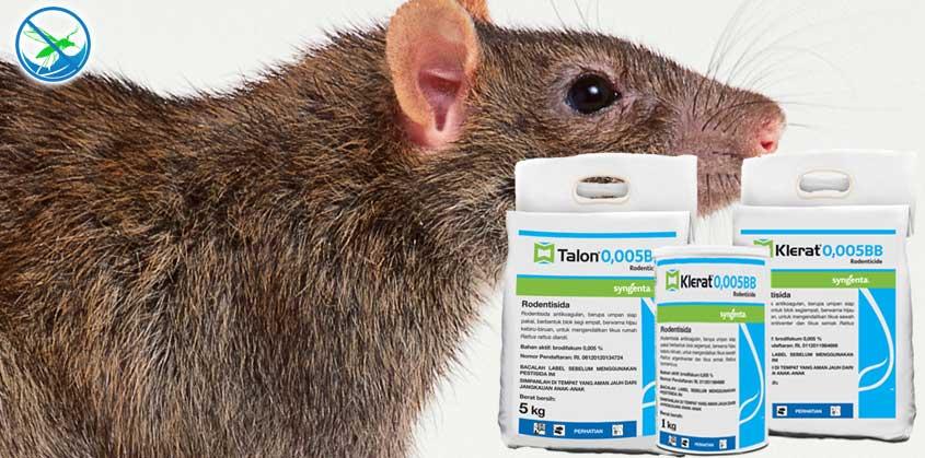 obat pembasmi tikus yang aman