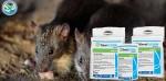 obat pengusir tikus dalam rumah