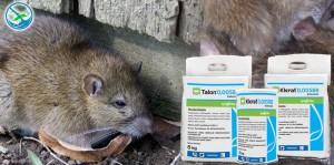 obat pengusir tikus dari rumah