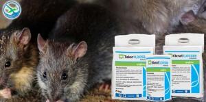 obat pengusir tikus got