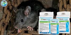 obat pengusir tikus herbal