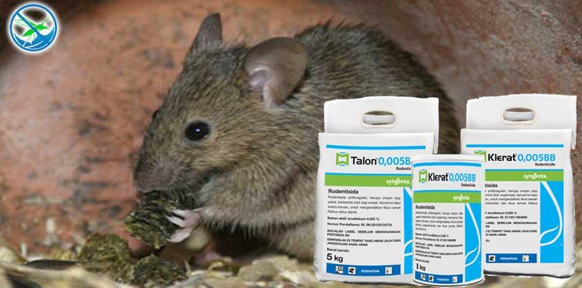 obat untuk basmi tikus