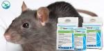 obat untuk membasmi tikus di rumah